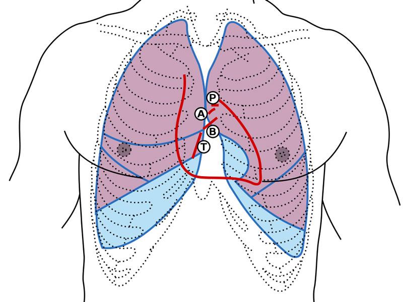 valvole cardiache